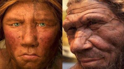 Humanos y neandertales se reproducían entre ellos de manera común