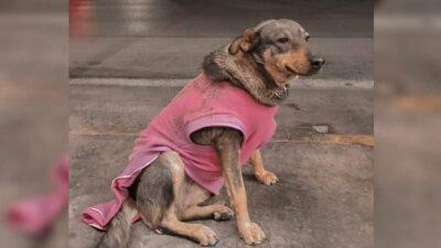 Lola, la perrita chambeadora en taquería de Ciudad Victoria, Tamaulipas