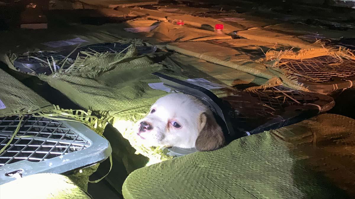 China: hallan 160 cajas misteriosas con perritos y gatitos