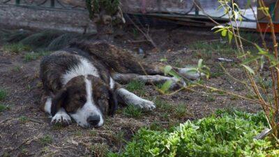 En Chihuahua, perros y gatos son envenenados; hay investigación