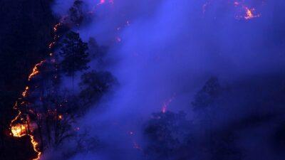 Incevndio reforestación