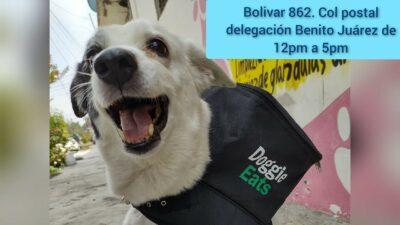 Doggie Eats: En CDMX, perrita repartidora recauda fondos
