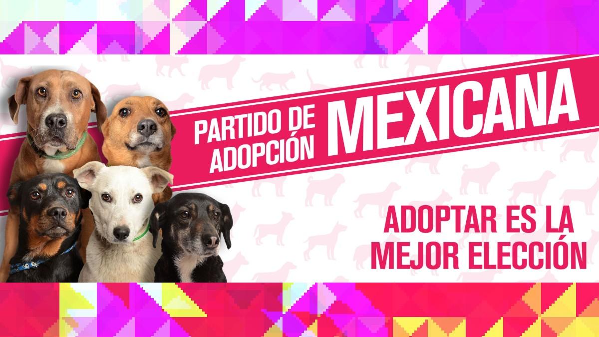 CDMX: Crean partido para adopción de perros; conoce a sus candidatos