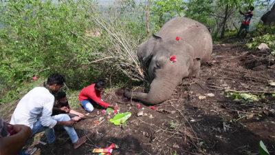 Rayo habría matado a 18 elefantes salvajes en India