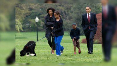 Los Obama recuerdan a Bo, su perro y fiel compañero en más de una década