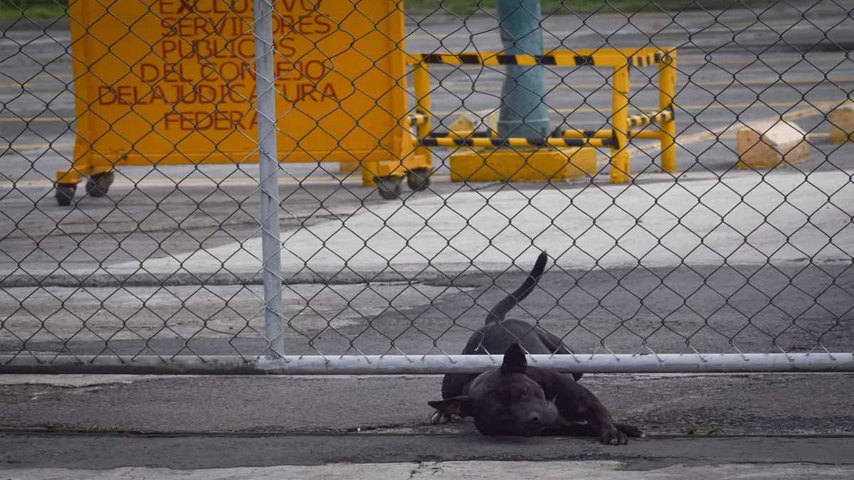 Perrita Luna: castigarán a maltratadora en Baja California Sur