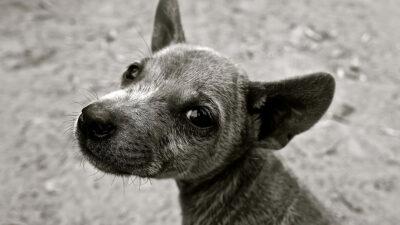 perros sin raza diferencias