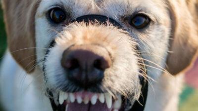 Estas son las razas de perro más agresivas, según expertos