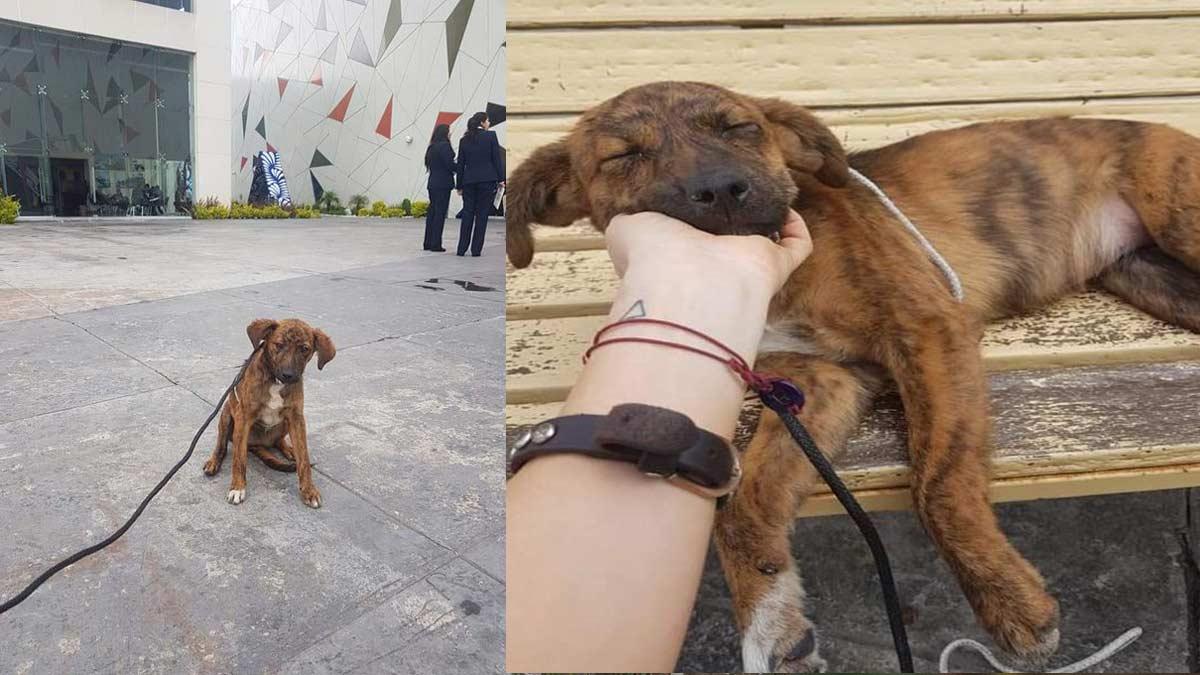 Puebla: historia de perrita Frida rescatada