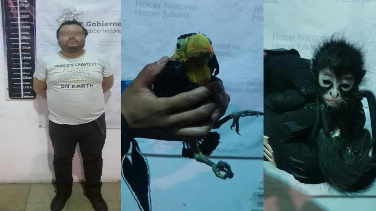 Puebla: detienen a hombre por querer vender mono y tucán