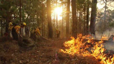 Reportan 57 incendios forestales en estos 14 estados