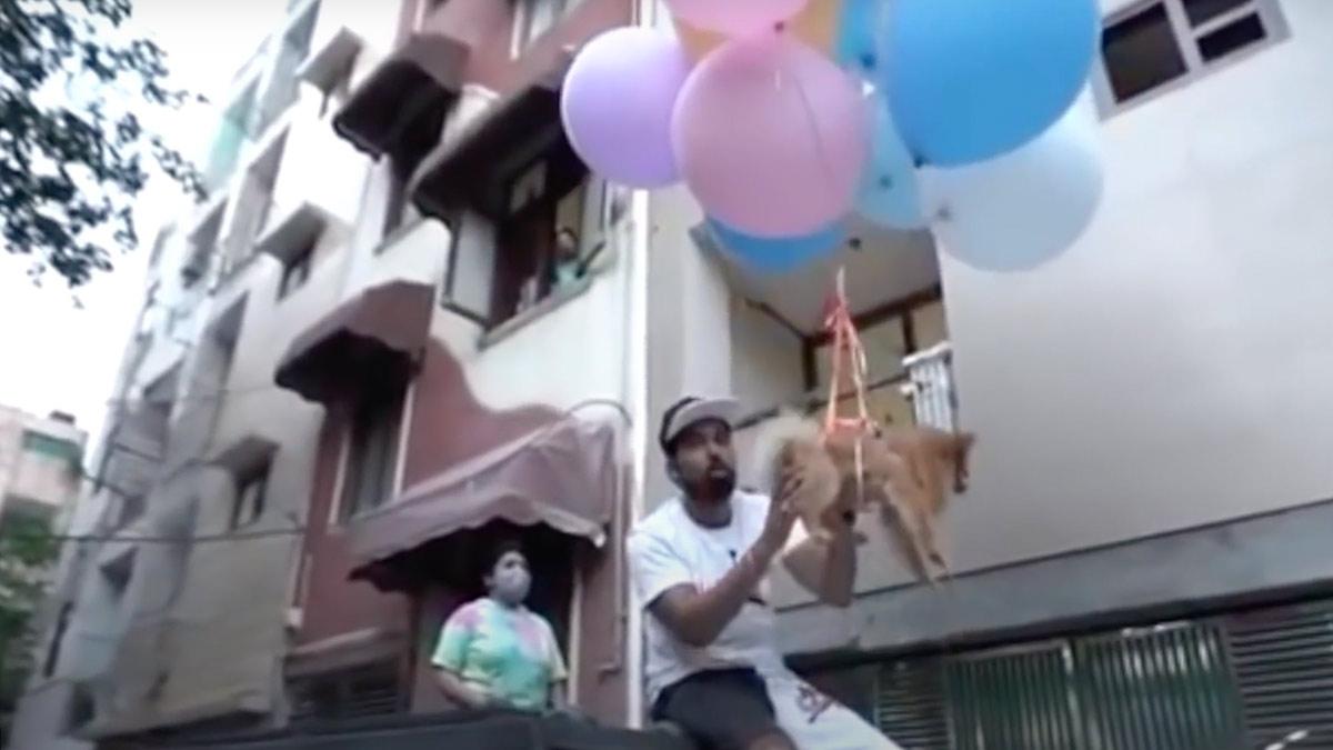 perro volando youtuber