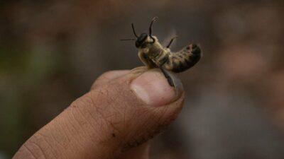 México: Ellas se encargan de proteger y salvar a las abejas