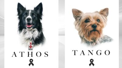 Querétaro pide justicia para Athos y Tango, perros envenenados