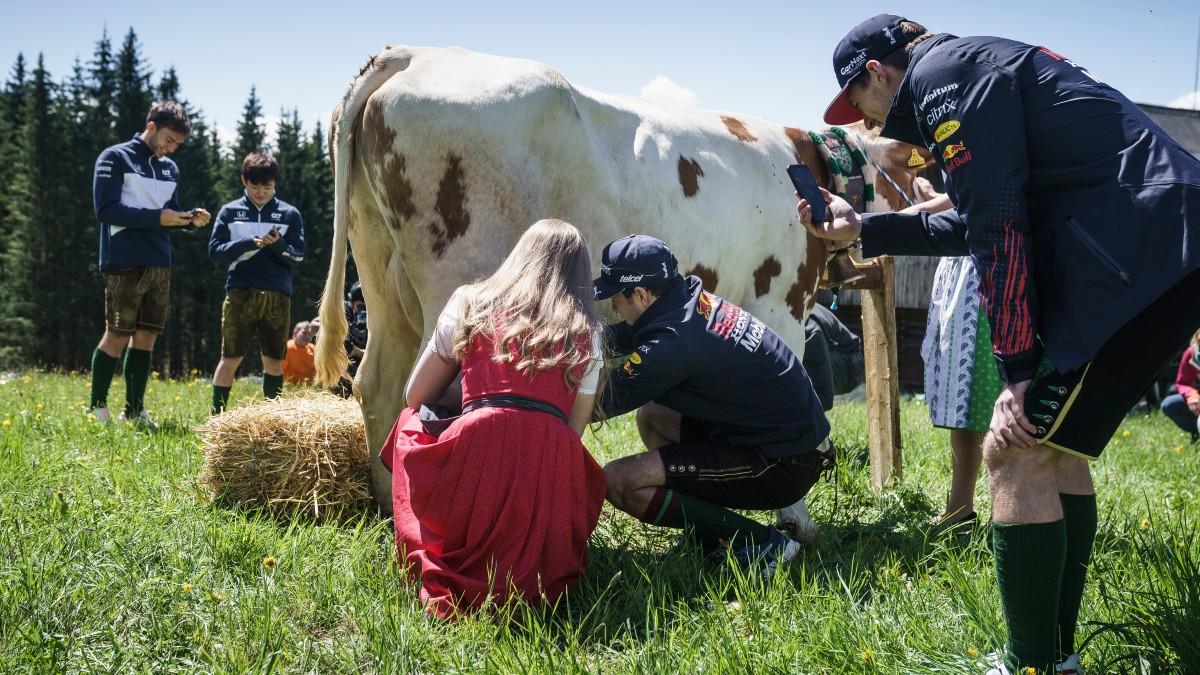 Checo Ordena Vaca