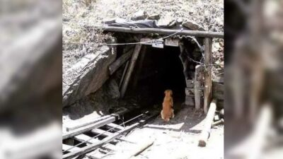 Coahuila: perrito espera a su amigo humano en mina colapsada