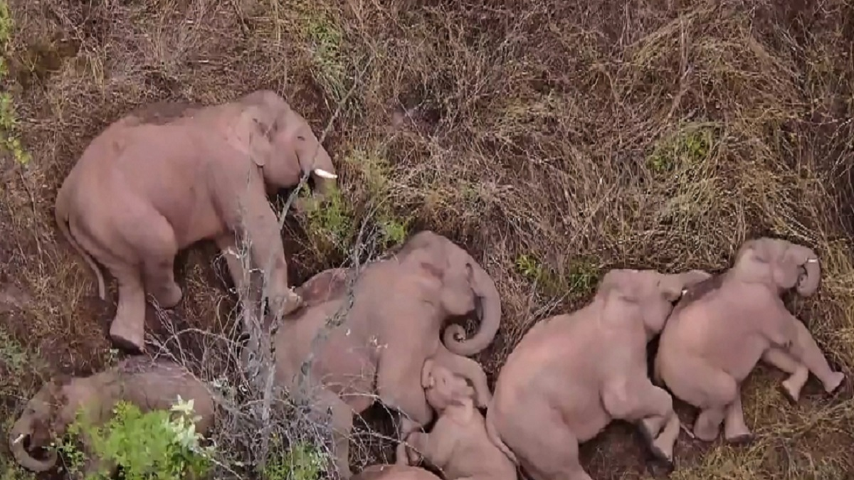 China: manada de elefantes causan sensación en internet
