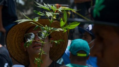 SCJN lúdico marihuana