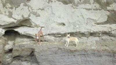 perros socavón en Puebla