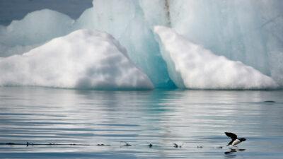 Océano Austral: dónde está y por qué tardaron en reconocerlo