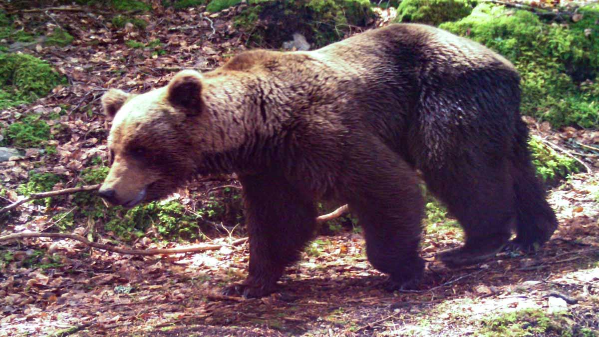 Mujer protege a sus perros de ataque de oso