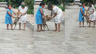 Yucatán: abuelitas traen a perrito que escapó de casa