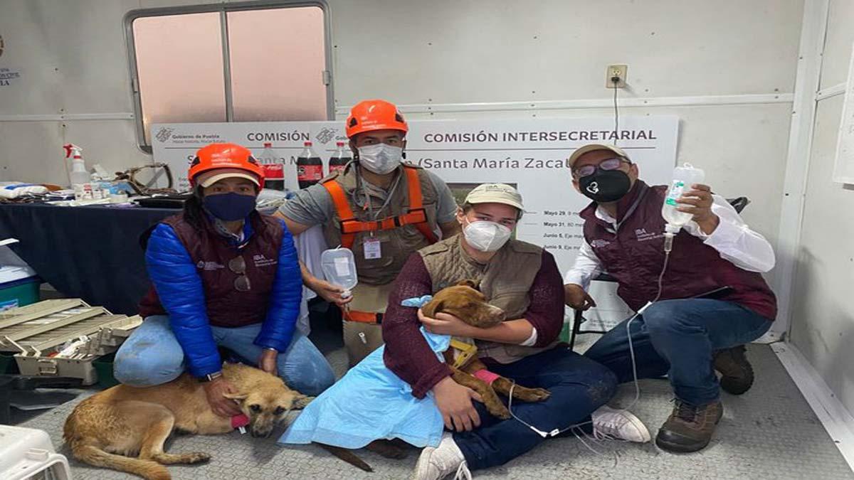Socavón en Puebla: cuál es el estado de salud de los perritos