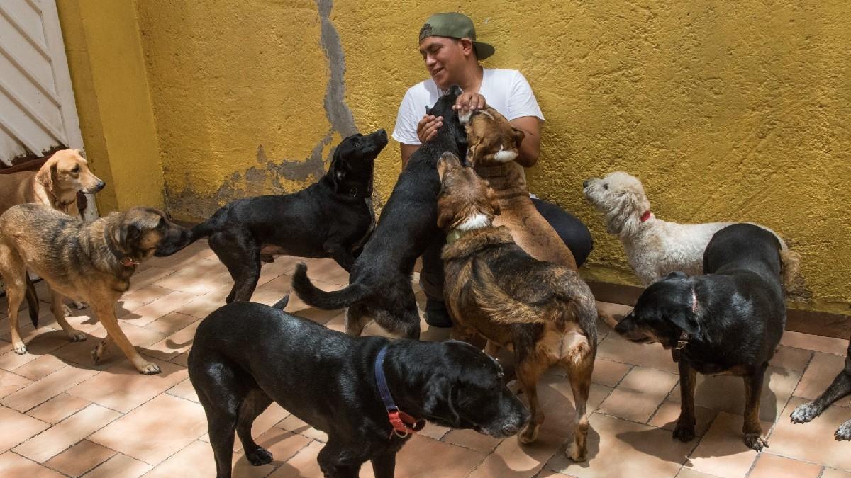 """Conoce la historia de """"La casa del mestizo"""", albergue de perros en CDMX"""