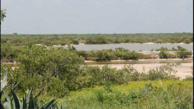 Yucatán: proyectan sanear manglares hechos basurero