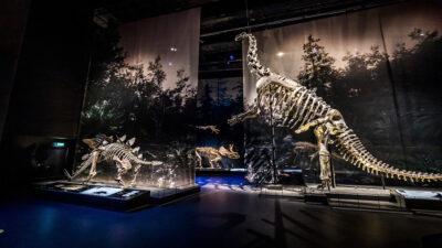 Rayos X muestran cómo respiraba un dinosaurio