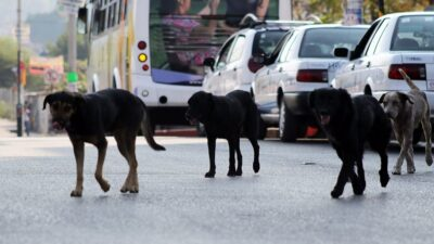 Chiconcuac, Estado de México: jauría de perros asesina a hombre
