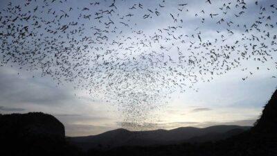 Guerrero: Santuario de murciélagos en imágenes