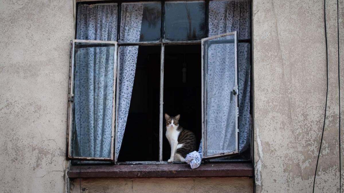 Karen Wellen Karen gatos
