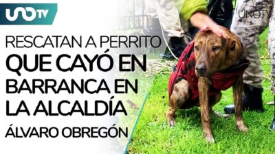 CDMX: perrito cae a barranca en Álvaro Obregón; personal de SSC lo rescata