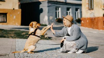 Día Mundial del Perro 2021: beneficios a la salud mental por tener uno