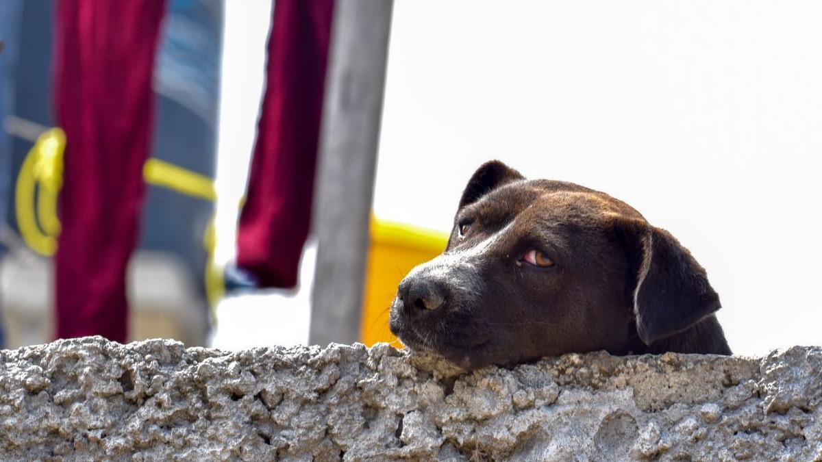 Justicia para Silver: marchan por muerte de perro en Tlalnepantla