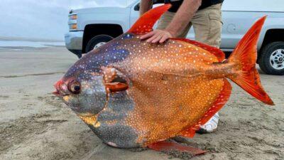 enorme pez