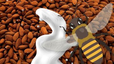 Producción de leche de almendras mata a millones de abejas; ve razón