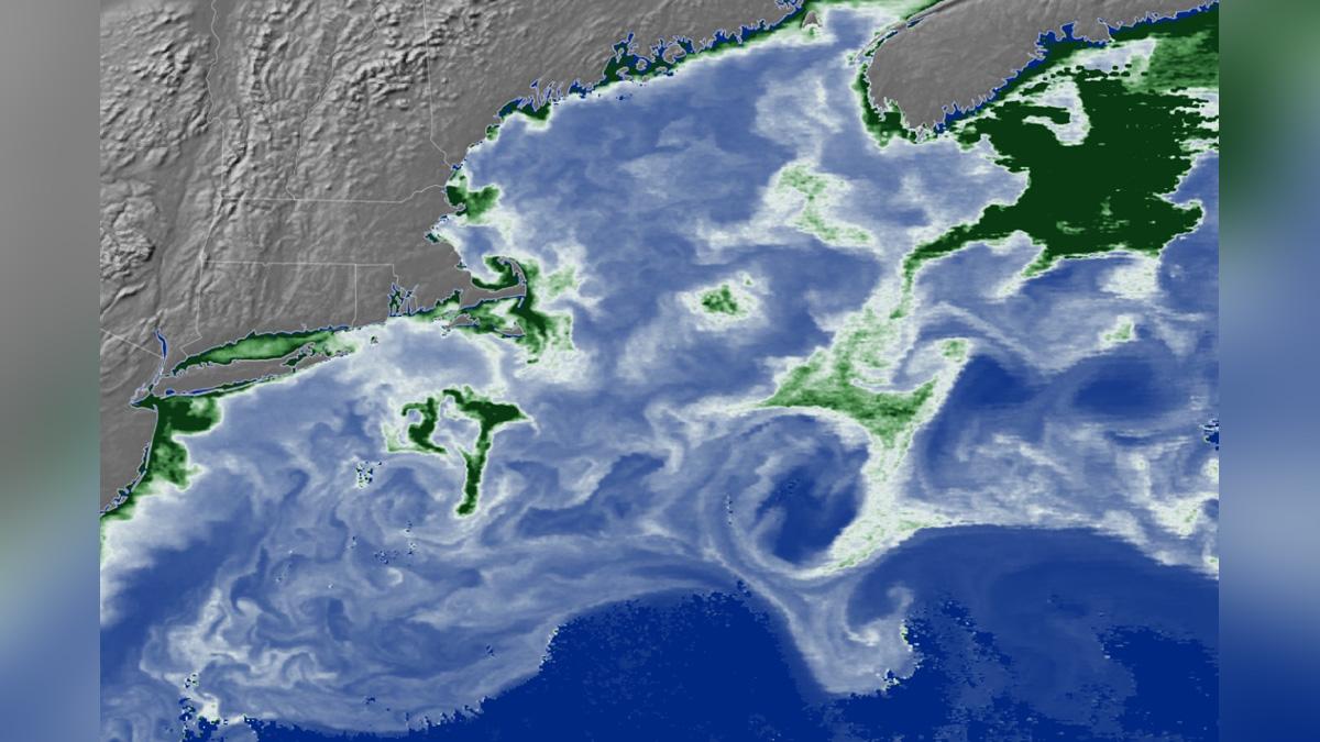 océanos fosforescentes