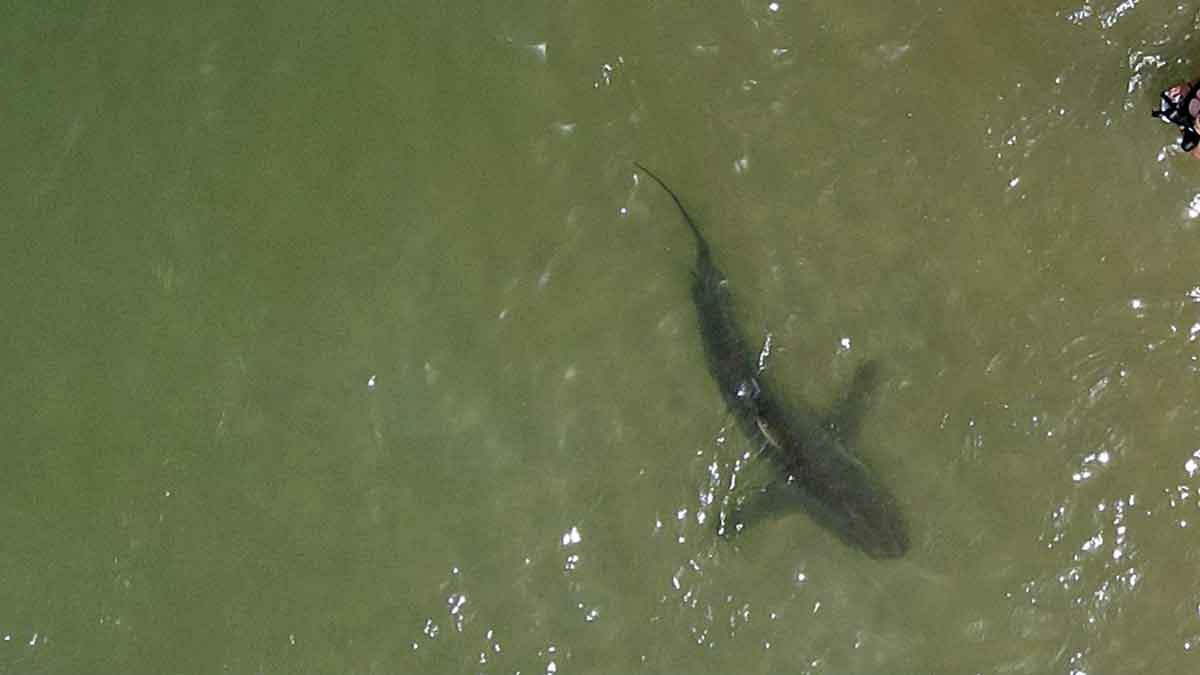 ¡Por poco!: tiburón salta y ataca a paracaidista
