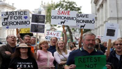 Se manifiestan en Reino Unido para evitar sacrificio de alpaca
