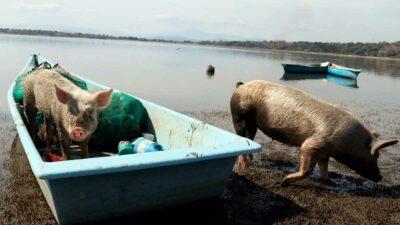 Yucatán: granjas porcícolas amenazan cenotes mayas