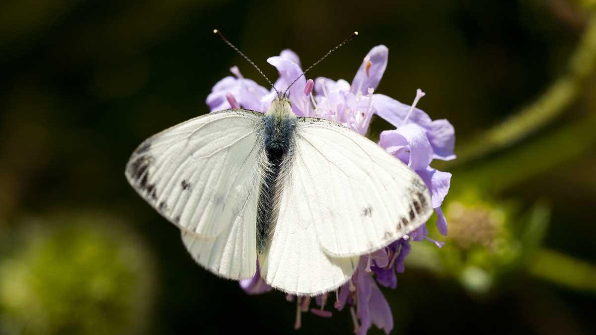 La pequeña mariposa llamada Ralph tuvo un final muy triste. Foto: Getty Images | Ilustrativa