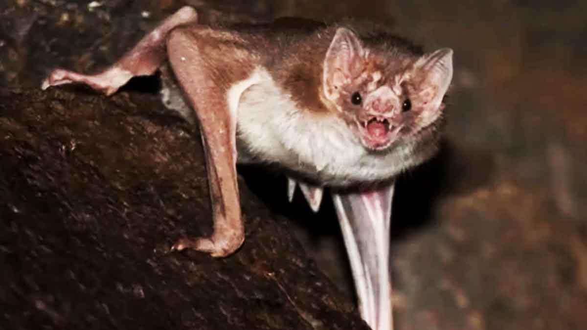 murciélagos SARS-CoV-2 COVID-19