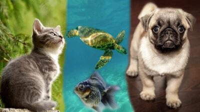 las mejores mascotas para niños