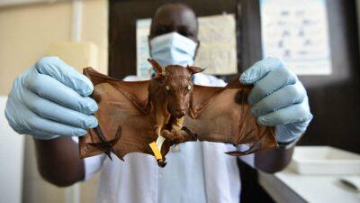 Marburgo: OMS alerta en África por virus de murciélago