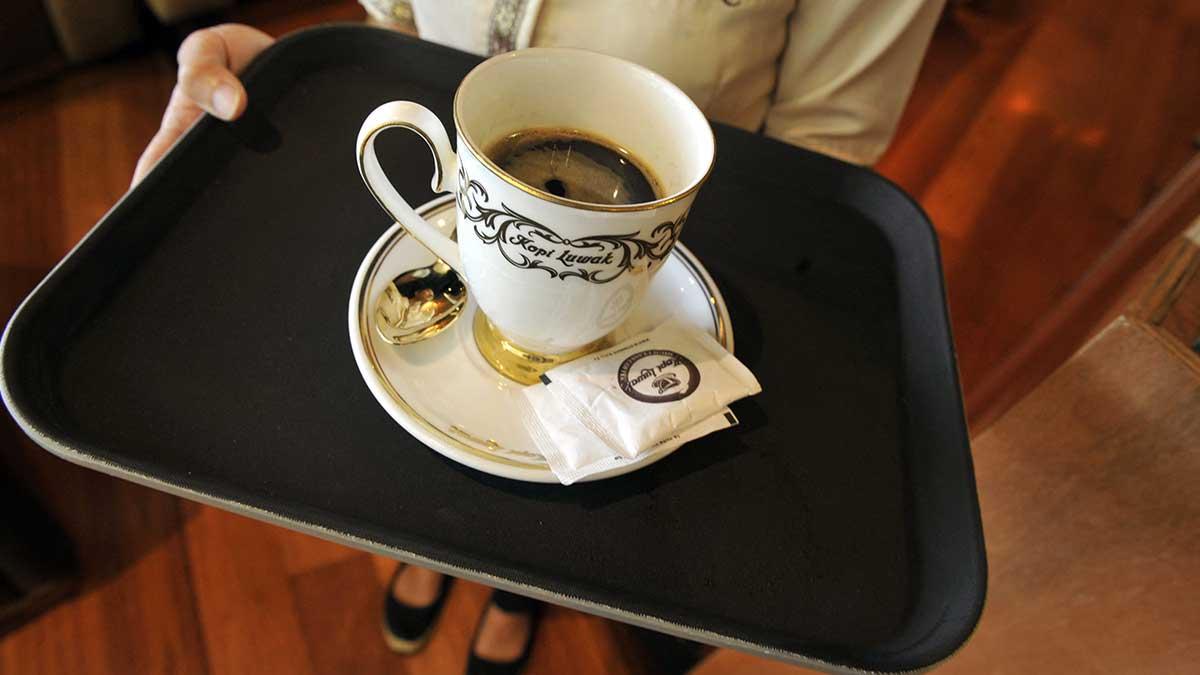 Día Internacional del café 2021: Kopi Luwak, el más caro del mundo