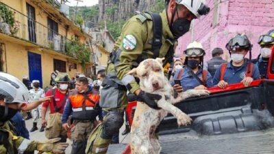 Cerro del Chiquihuite: Rescatan con vida a perro tras 3 días atrapado