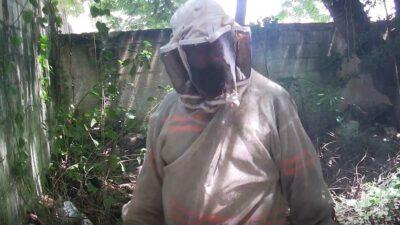 Yucatán: rescatan abejas para que evitar que sean quemadas