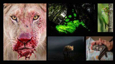 fotos vida silvestre